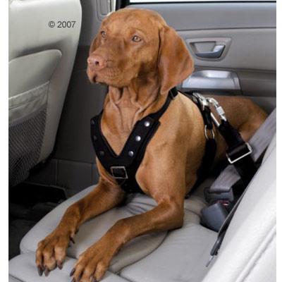 ceinture de sécurité chien toutou